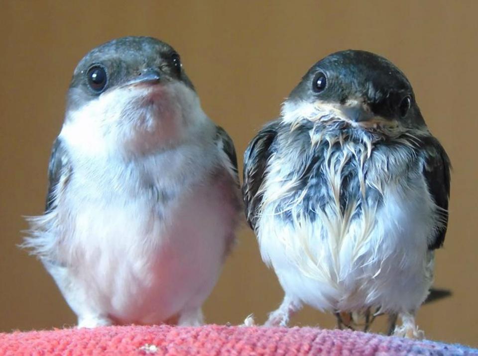 Druženje s pticama